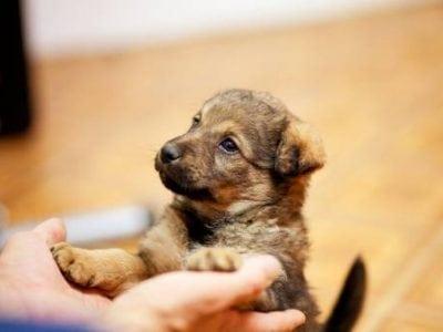 4 conseils de base pour instaurer une relation saine entre vous et votre chien