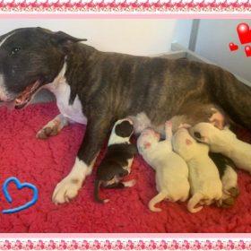 maman des chiots et ses bebes