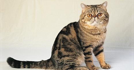 Tout savoir sur les vaccinations du chat