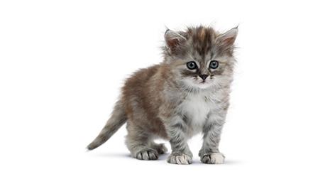 Hygiène et vie de votre chaton