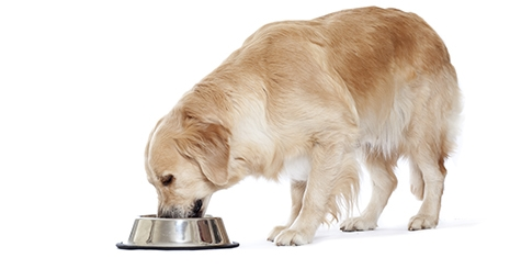 https://www.wikichien.fr/wp-content/uploads/sites/4/57237111700eb_en-vieillissant-mon-chien-mange-moins.jpg