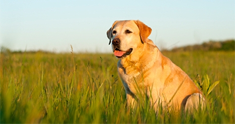 https://www.wikichien.fr/wp-content/uploads/sites/4/572372824af43_odorat-et-appetit-sont-lies-chez-le-chien.jpg