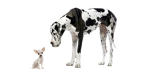 Petits et grands chiens : pourquoi les nourrir différemment du début à la fin de leur vie ?