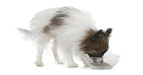 Comment choisir une alimentation pour chien ?