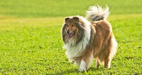 https://www.wikichien.fr/wp-content/uploads/sites/4/572378eb2ed77_coprophagie-chien.jpg