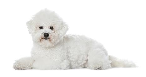 https://www.wikichien.fr/wp-content/uploads/sites/4/572712b19572f_sante-urinaire-chien-senior.jpg