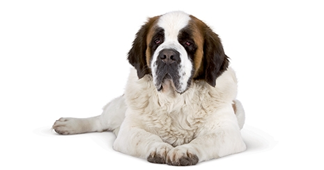 https://www.wikichien.fr/wp-content/uploads/sites/4/572712d7d72c2_chien-age.jpg
