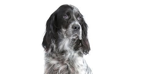 https://www.wikichien.fr/wp-content/uploads/sites/4/572713d73f2bd_l-incontinence-chez-la-chienne-mature.jpg