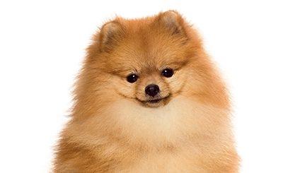 Souscrire un contrat d'assurance-santé pour mon chien : quand et pourquoi le faire ?