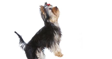 https://www.wikichien.fr/wp-content/uploads/sites/4/5727191a7aeff_evaluer-cout-assurance-sante-chien.jpg