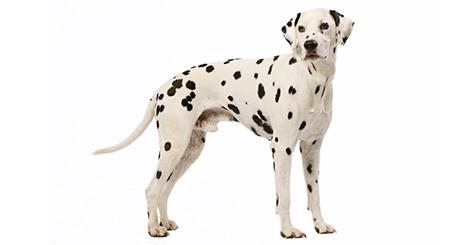 Accompagner votre chien lors de sa stérilisation