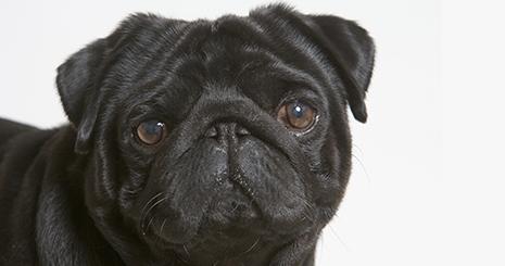 https://www.wikichien.fr/wp-content/uploads/sites/4/574ef8d589679_phobie-chien.jpg