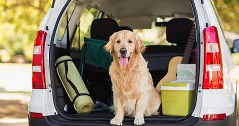 https://www.wikichien.fr/wp-content/uploads/sites/4/57517e657d15b_partir-en-vacance-avec-son-chien.jpg
