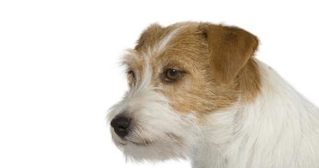 https://www.wikichien.fr/wp-content/uploads/sites/4/577f71d8499a8_entretien-hygiene-chien.jpg