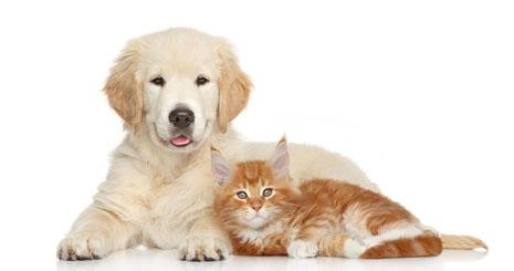 https://www.wikichien.fr/wp-content/uploads/sites/4/57a4600fbd4a5_que-faire-chien-chat-intoxication.jpg