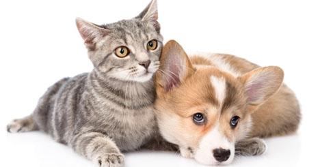https://www.wikichien.fr/wp-content/uploads/sites/4/57a4606903232_que-faire-chien-chat-blesse.jpg