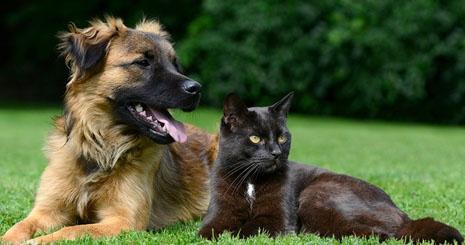 https://www.wikichien.fr/wp-content/uploads/sites/4/57a462601f74e_que-faire-chien-chat-electrocution.jpg