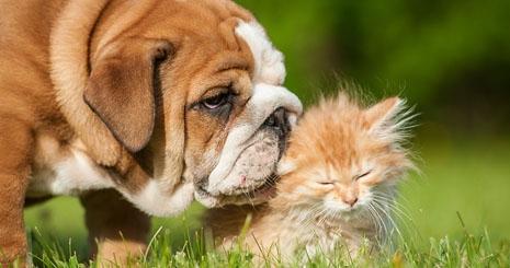 https://www.wikichien.fr/wp-content/uploads/sites/4/57a4bd2577de2_que-faire-chien-chat-urine-sang.jpg
