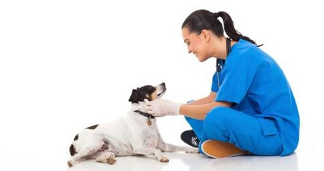 https://www.wikichien.fr/wp-content/uploads/sites/4/57ad81e9a4fd7_faire-prendre-chien-medicaments.jpg