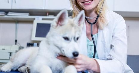 https://www.wikichien.fr/wp-content/uploads/sites/4/57ad91926b599_veterinaire-poids-chien.jpg