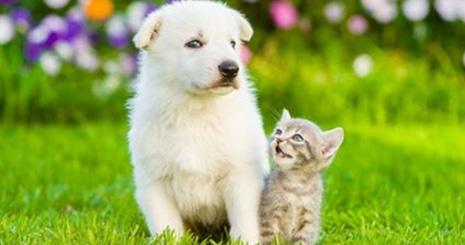 https://www.wikichien.fr/wp-content/uploads/sites/4/57e3e123eafe9_mieux-comprendre-comportement-chien-chat.jpg