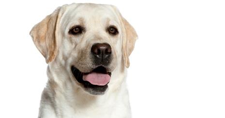 Savoir identifier l'excès de poids chez un chien