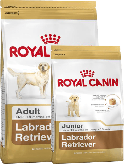 Aliment du Labrador retriever