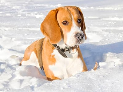 https://www.wikichien.fr/wp-content/uploads/sites/4/alimentation-du-chien-en-hiver-4.jpg
