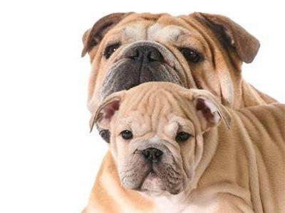 Alimentation : petit chien deviendra grand
