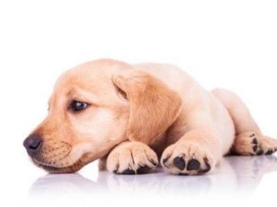 Avoir un chien propre