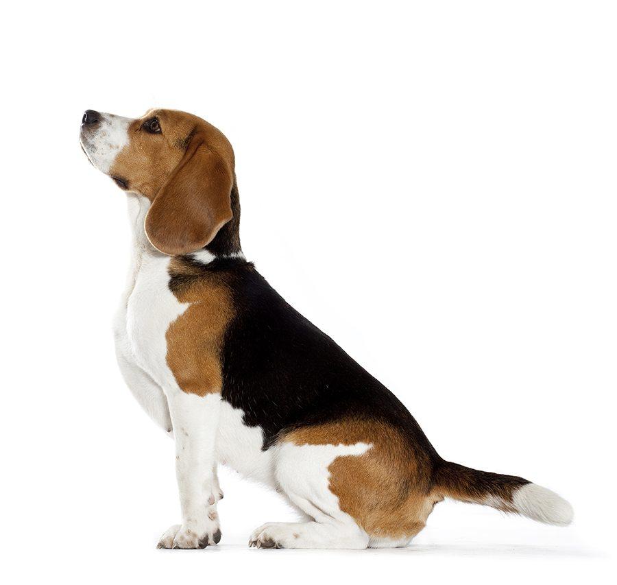 Histoire du Beagle