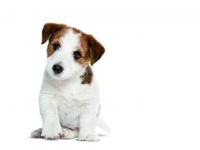 Régime alimentaire du chien