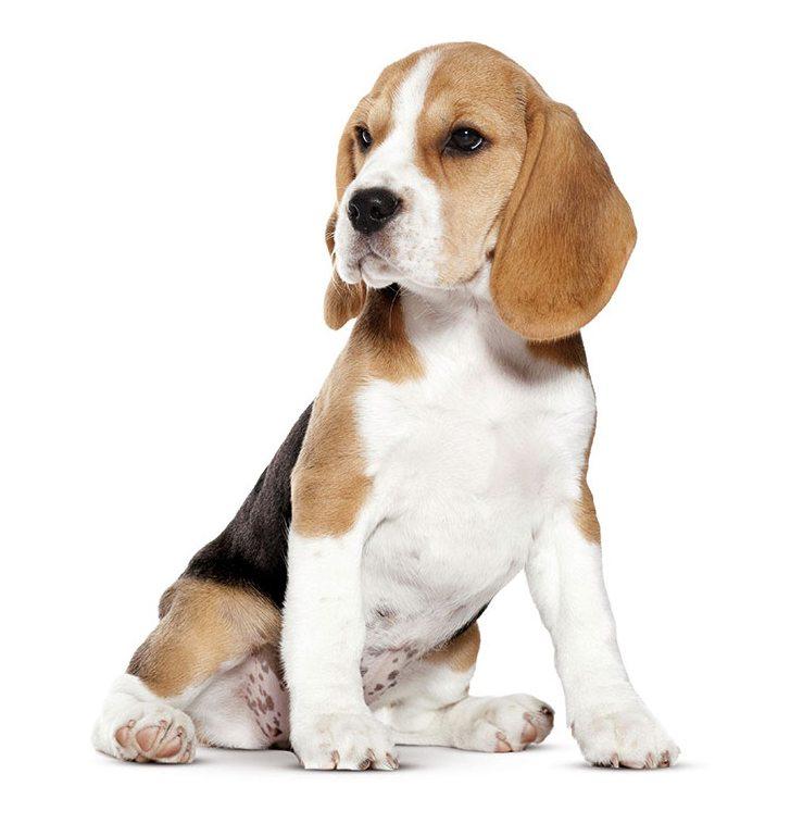 Site rencontre amoureux chiens