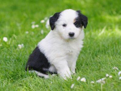 Choisir une pension pour chien