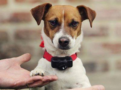 Collier anti-fugue pour chiens