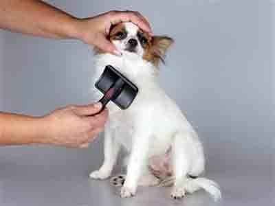 Comment brosser le pelage du chien