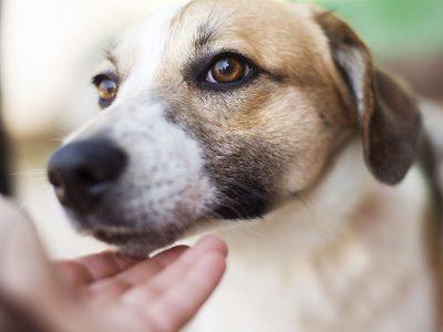 Comment préparer votre chien à la naissance de bébé ?