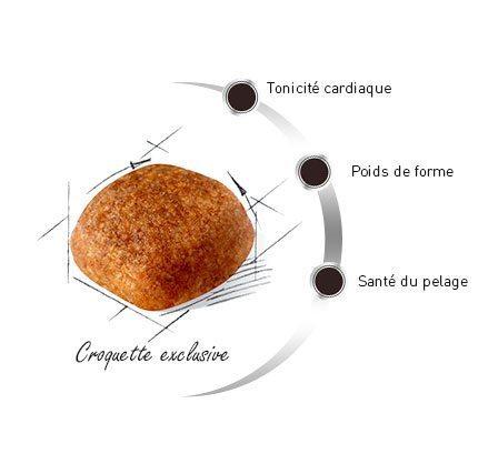 Croquette du Cavalier king charles spaniel