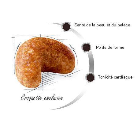 Croquette du Cocker Anglais