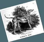 Histoire du Dalmatien