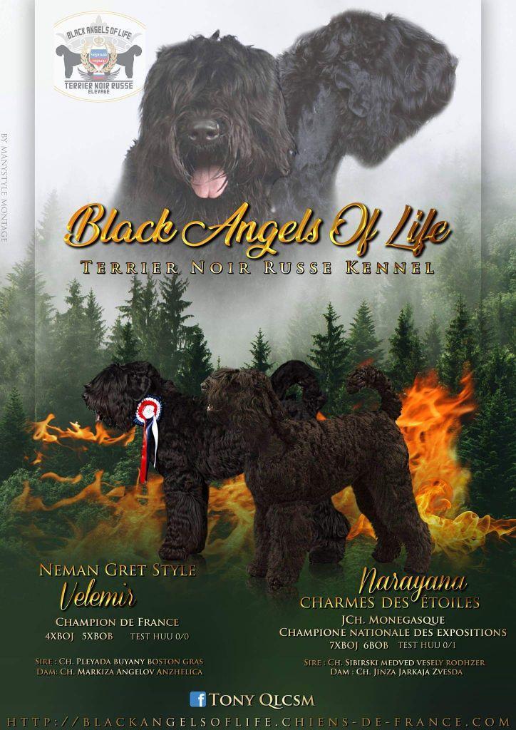 Chiot Terrier noir Russe : 6  mâles - femelles 2 242595