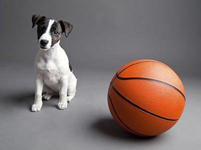 Faire du sport avec mon chien