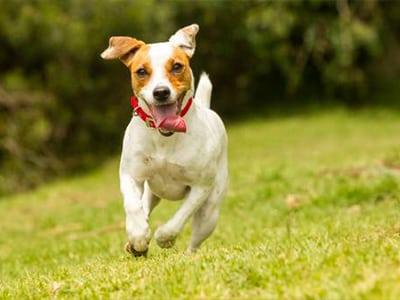 Faire du sport avec un chien