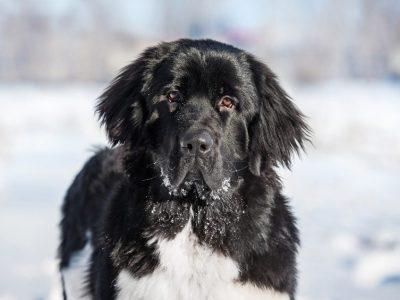Carence alimentaire : comment limiter les risques pour mon chien ?