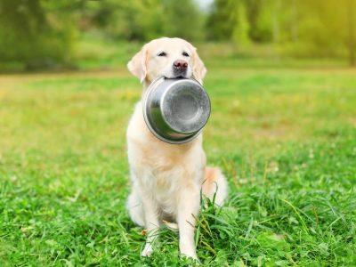 Mon chien boude son aliment : comment stimuler son appétit ?