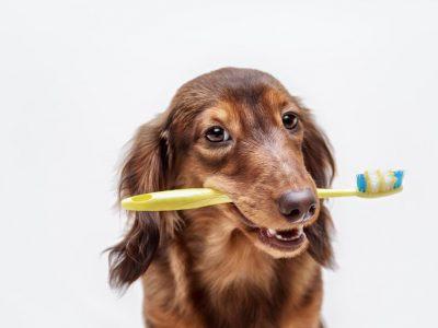 Une hygiène bucco-dentaire à préserver