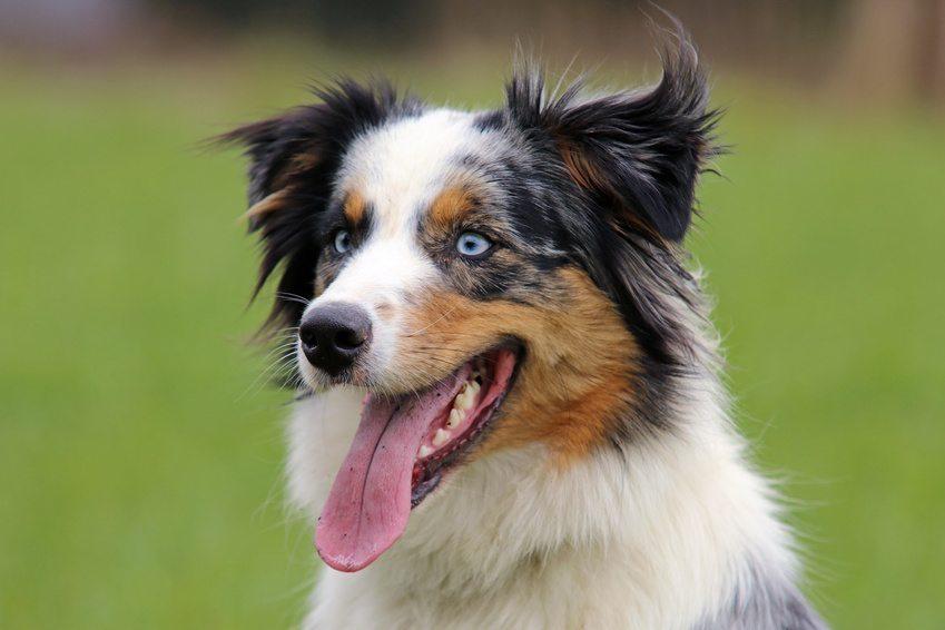 Le chien du troisième millénaire
