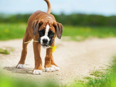 Les antioxydants, est-ce bon pour mon chien ?