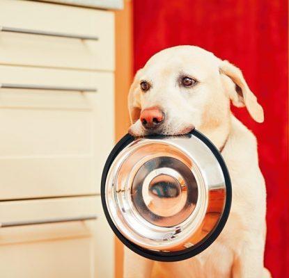 Mon chien boude ses croquettes, que dois-je faire ?