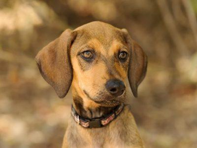 Quels aliments sont nocifs pour mon chien ?
